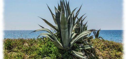 Beitragsbild zum Thema Aloe Drink Wirkung und Inhaltsstoffe von LR Kosmetik.